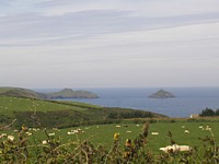 Coast at Port Quin